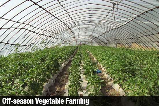 tunnel farming High tunnels can be a great additional tool for the small farmer learn the top ten  reasons why a high tunnel might be right for your small farm.